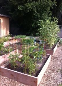 Garden July 2013
